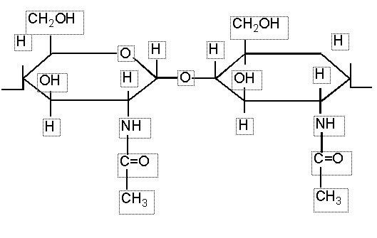 E1105 Lizozim Enzimi Hakkında Bilinmesi Gerekenler